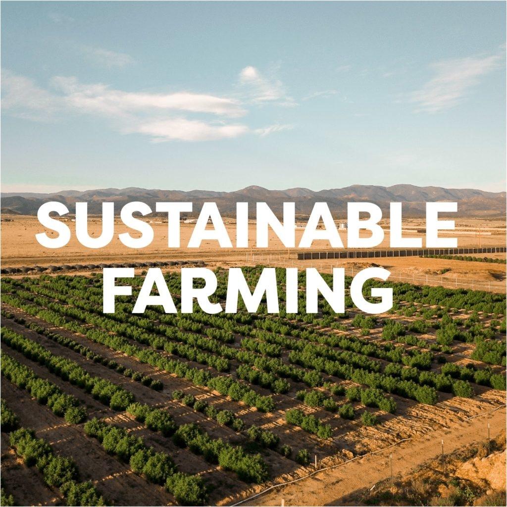 sustainable hemp farming practice of veritas farms