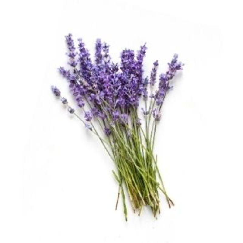 Lavender (Lavender Eucalyptus)