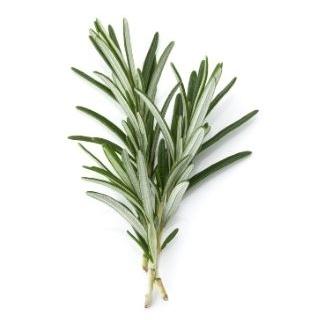 Rosemary (Mind)