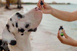 Giving CBD Oil to Your Pet | Veritas Farms
