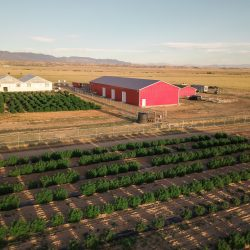 Veritas The Farm